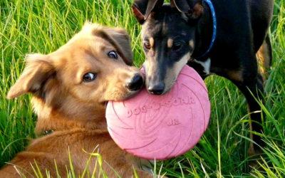 Wandelroute: rondje met de hond rond Vakantiepark 't Posterbos