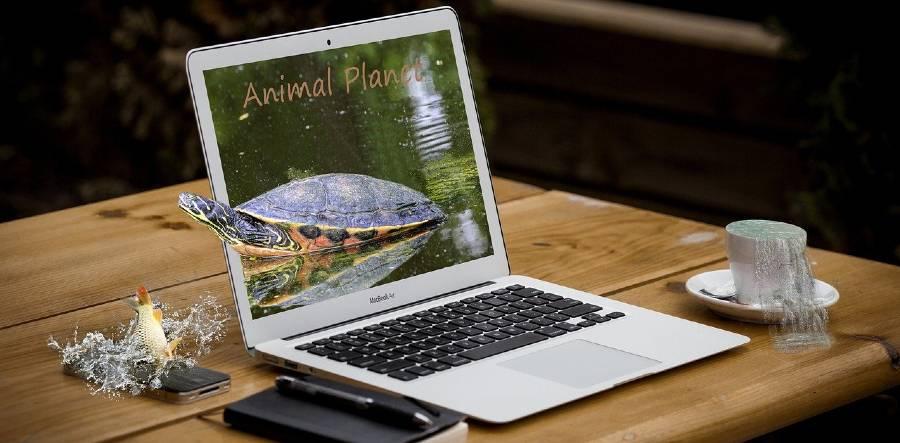 laptop workation Posterbos Limburg